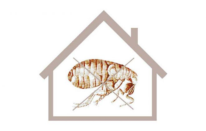 moving-out-pest-control