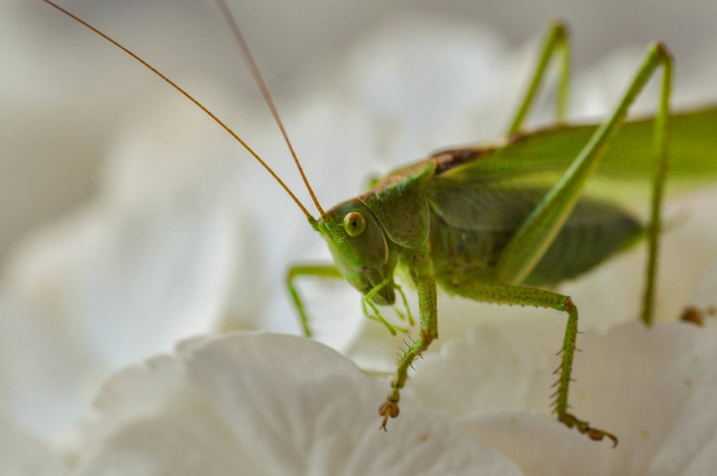 Commercial Archives Sydney S Best Pest Control
